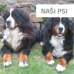 Naši psi